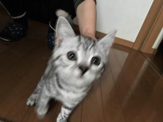 子猫ちゃん.jpg